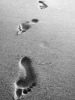 siguientes-pasos